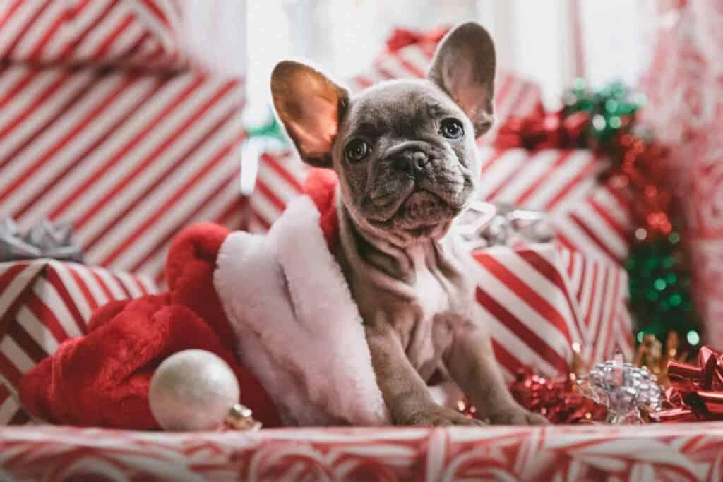 Christmas Winter Holiday Marketing Calendar creative digital marketing agency nyc